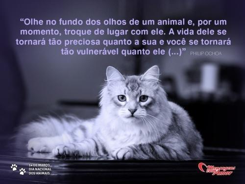 """""""Olhe no fundo dos olhos de um animal e, por um momento, troque de lugar com ele. A vida dele se tornará tão preciosa quanto a sua e você se tornará tão vulnerável quanto ele (...)""""  #DiaDosAnimais #gatos"""