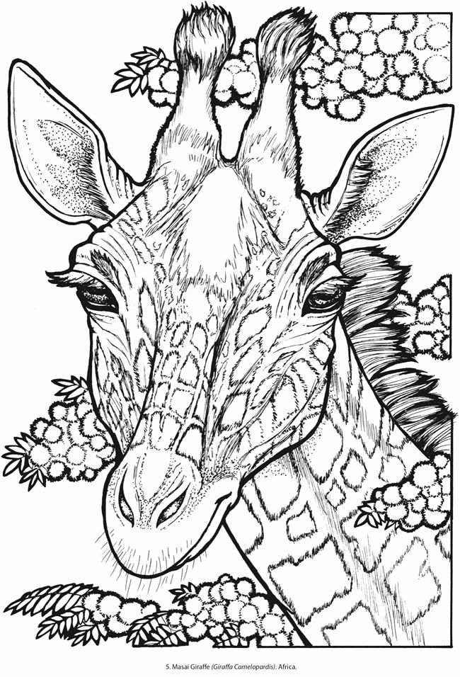 Pin On Coloring Animal Pages