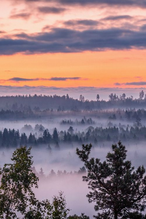 sundxwn: Magigal misty night at midsummer day by Lauri Lohi