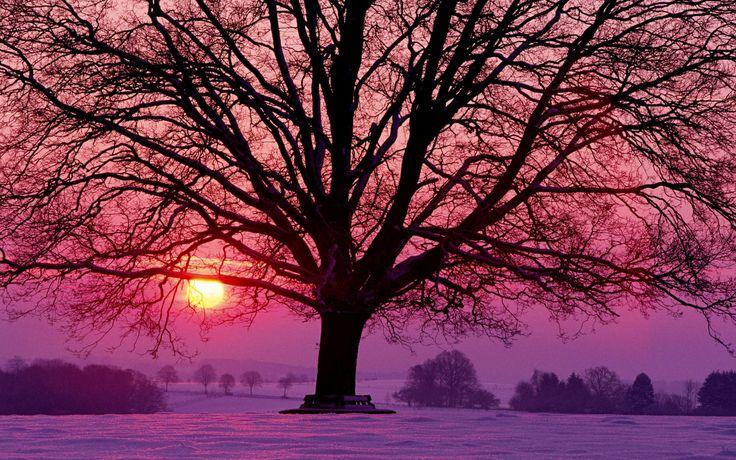 Zonsondergang, verschillende kleuren, silhouet, tegenlicht, boom, winter