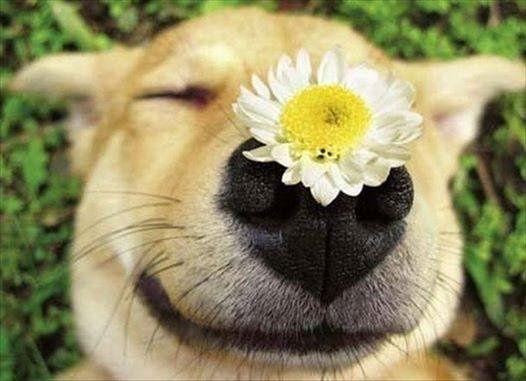 = D #dog #flower #pets