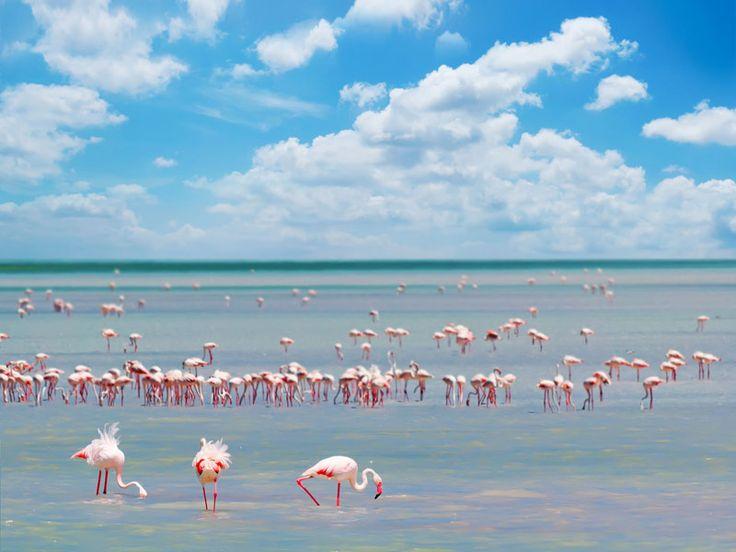 fenicotteri rosa in Sardegna #flamingoes in #Sardinia
