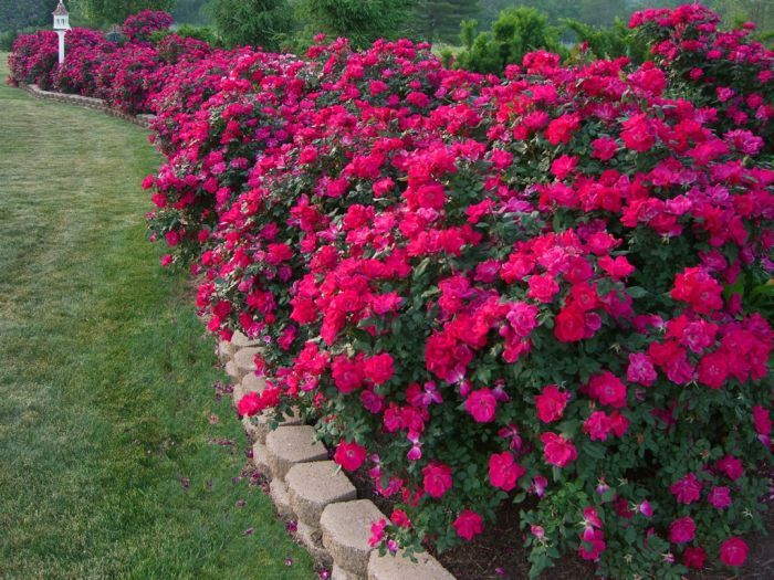 Amazing flower bed border ideas garden outside pinterest for Flowers for flower beds