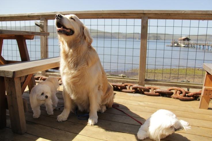 Tomales Bay Dog Friendly