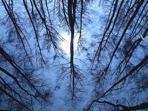 Reflection of cypress trees in bayou water in West Monroe, LA.