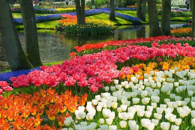 PAISAJES PRIMAVERALES: Paisaje en primavera de Holanda