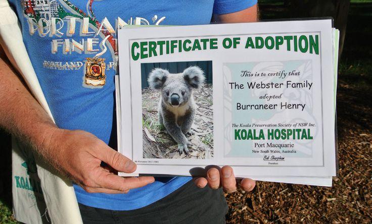 GOODS - Adopt a Wild Koala - Two Thousand