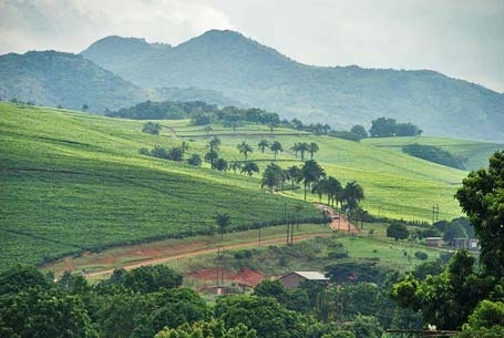 Tea estates outside Thohoyandou in the foothills of the Soutpansberg mountains - one of the friendliest towns in South Africa