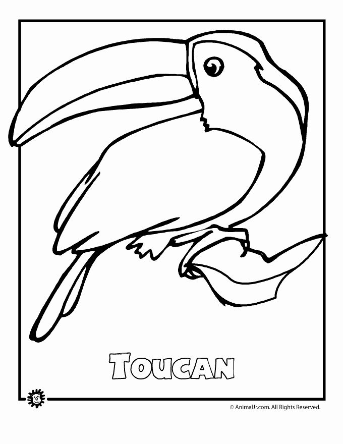 Rainforest Animal Coloring Pages In 2020 Endangered Rainforest Animals Rainforest Animals Animal Coloring Pages