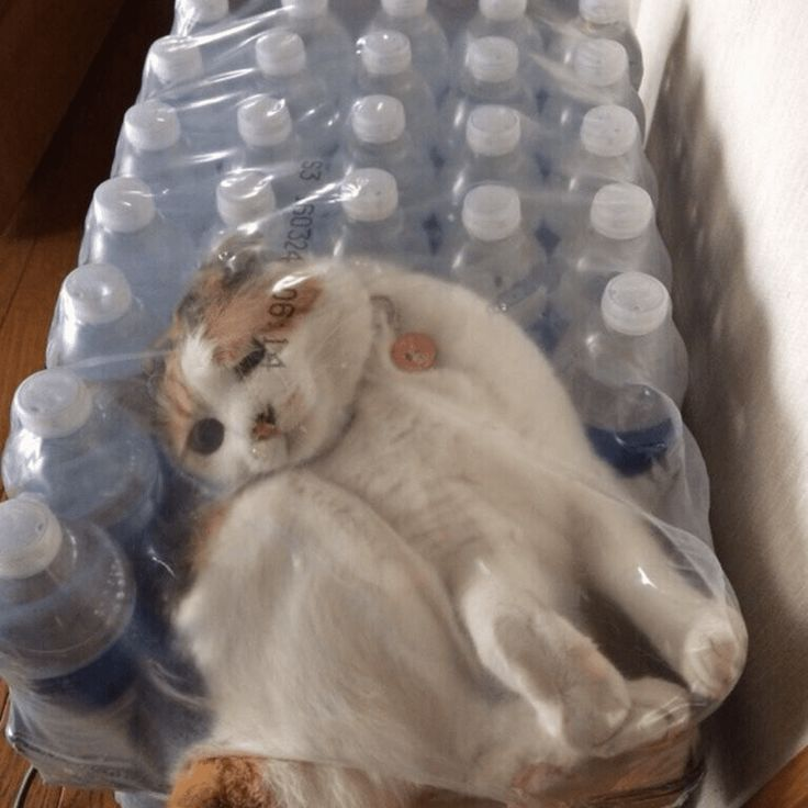 33 Cute Animals Stuck In Strange Places