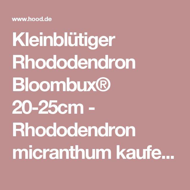 Fabulous Kleinbl tiger Rhododendron Bloombux cm Rhododendron micranthum kaufen bei Hood de