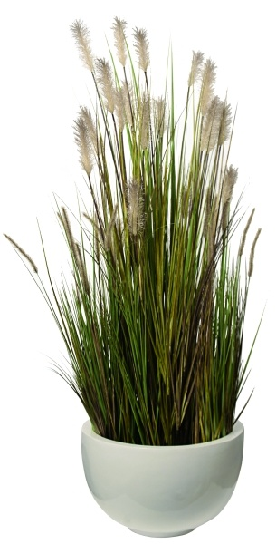 Grass, decoration, Melica Collection.