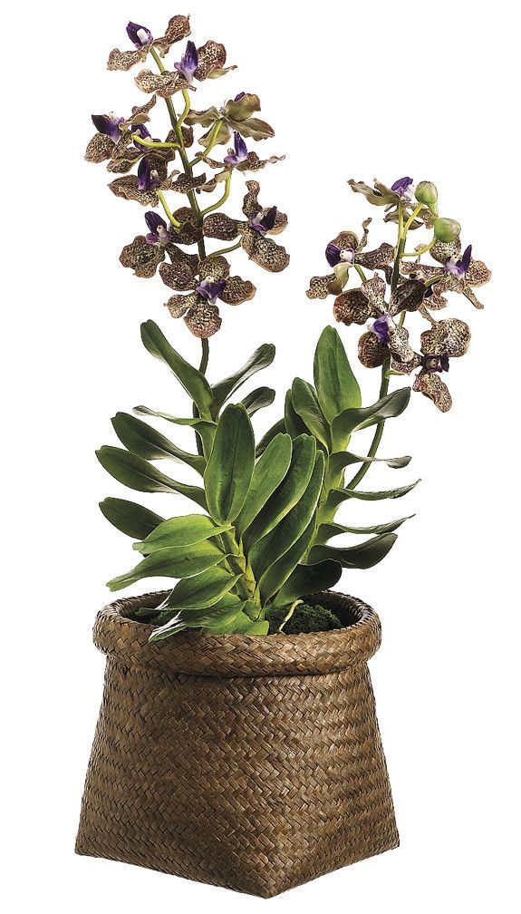 how to take care of vanda orchids