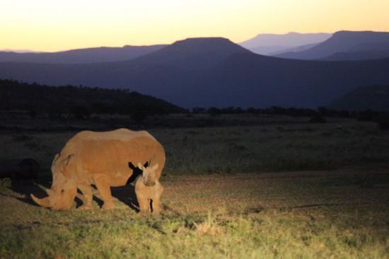All living things | Mount Camdeboo