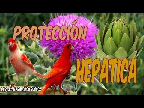 SUSTITUTO DEL GERMINADO (HD) - YouTube