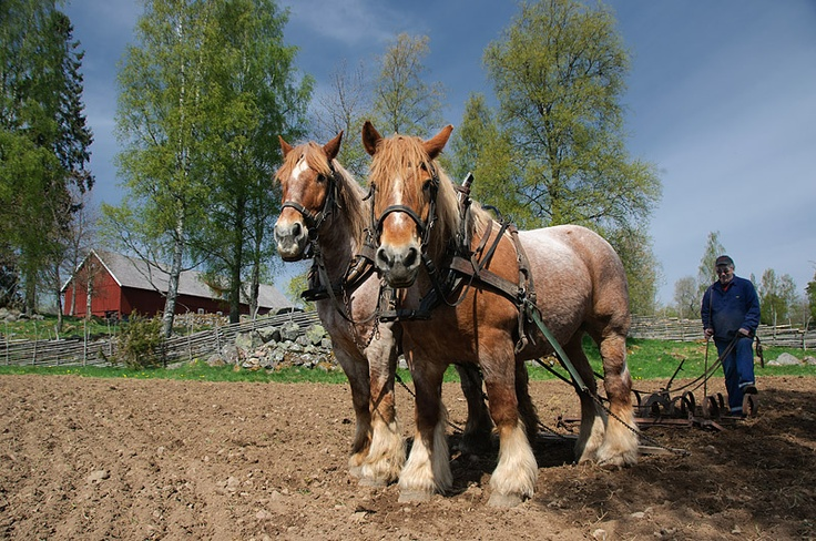 Plowing old school - Sweden