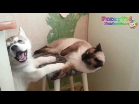 funny cats and dogs|Funny Dogs Videos |Crazy Funny Videos -  #dogs #funnydogs #puppy #doglover #animals #pet #cute #pets #animales #tagsforlikes Stop Your Dog's Behavior Problems! Click HERE to learn how! funny cats and dogs|Funny Dogs Videos |Crazy Funny Videos Funny Dogs Videos (  ) Is The Best Youtube Channel About Funny Dogs.Here You Can Find... - #Dogs