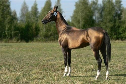 Ахалтекинская верховая порода —Современное название было дано породе по месту, где эти лошади были сохранены в чистоте в оазисе Ахал, узкой полосой тянущегося вдоль северного подножия Копет-Дага от Бахардена до Артыка, который населяло туркменское племя теке (или текинцев). Таким образом, дословно «ахал-теке» — это лошадь племени теке из оазиса Ахал.