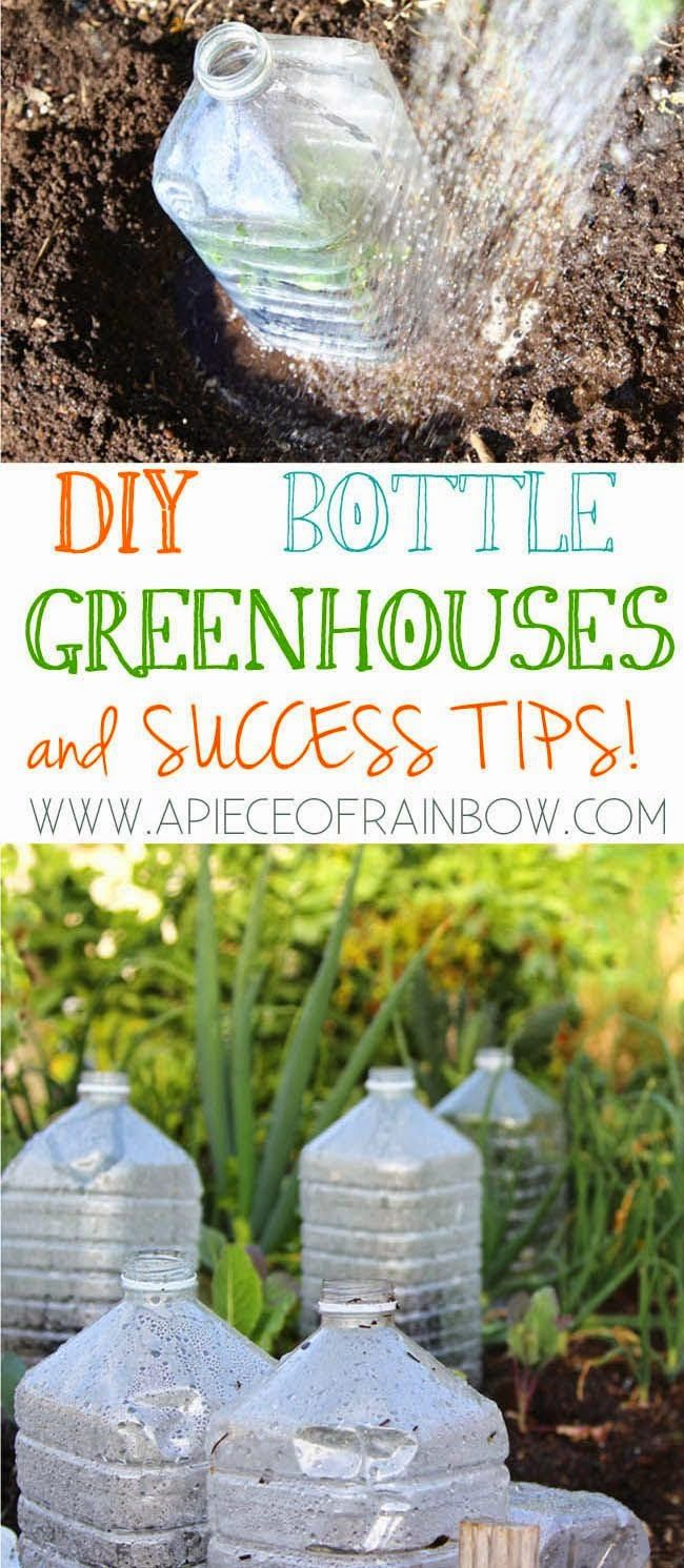 DIY bottle greenhouse and success tips!