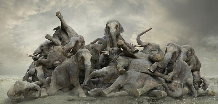 elephant-day.jpg