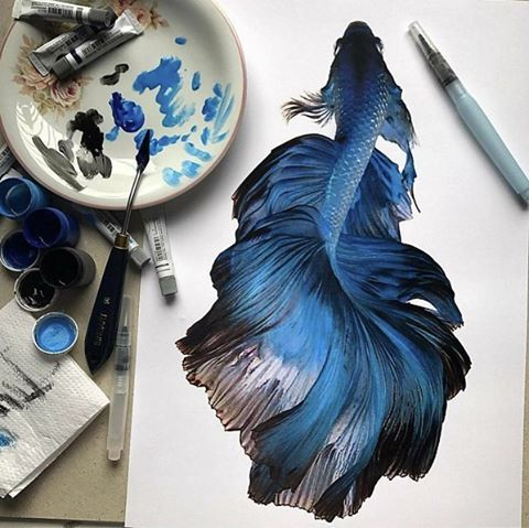Betta Fish by @helenarochah (Inda this betta style with some color drawn out further/ wispy
