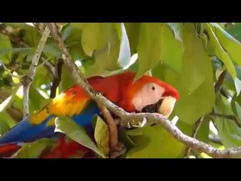 BEAUTIFUL   MACAW    PARROT   AND   MONKEY