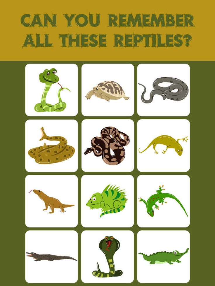 List Of Reptiles For Kids – Kids Matttroy