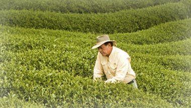 Maintenant en français!  Huile essentielle et aromathérapie | Young Living Essential Oils http://www.lechevalaunaturel.blogspot.ca/p/blog-page_24.html