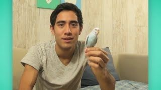 Best of Zach King Vines - YouTube