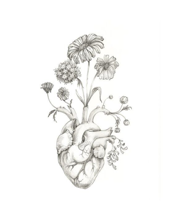 "8×10″ PRINT of original drawing ""Blooming Heart""- graphite, art, anatomy, floral, heart, valentine"