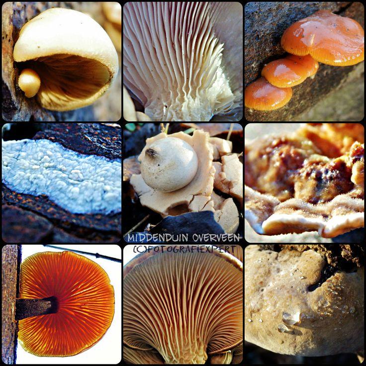 Lot of nice mushrooms at 29th December. NL