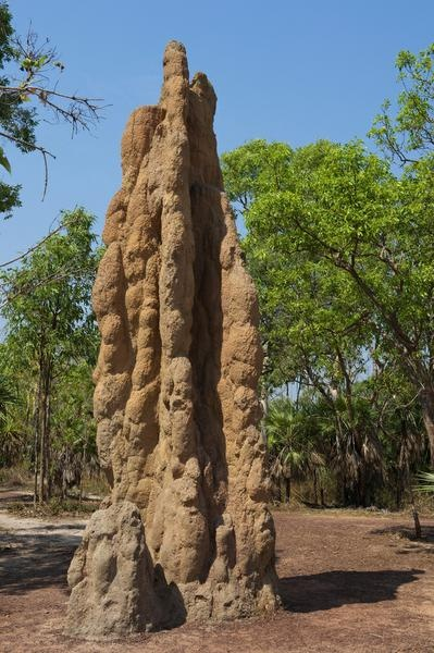 See Magnetic Termite Mounds, Litchfield National Park, Northern Territory, Australia - Bucket List Dream from TripBucket