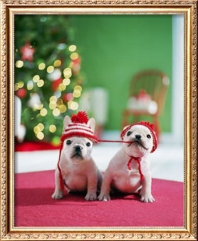 Christmas Frenchies