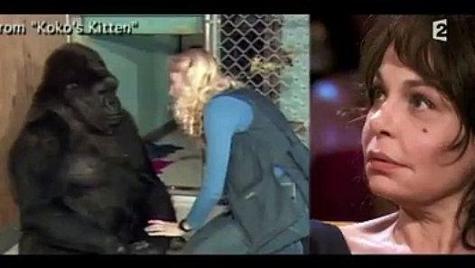 Voici la réaction de Koko la gorille http://www.dailymotion.com/video/k1h6CXJiMLWNZrji3zF