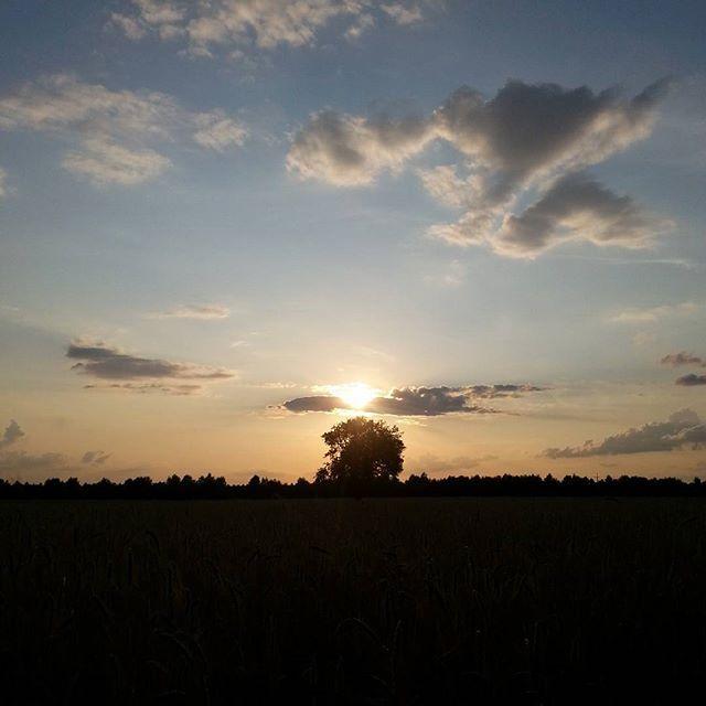 Drzewo. A tree. #dobranoc #goodnight #zachód #sunset #nawsi #countryside #prosteżycie #simplelife #spacer #walk #lato #summer #niebo #sky #nofilter #bezfiltru