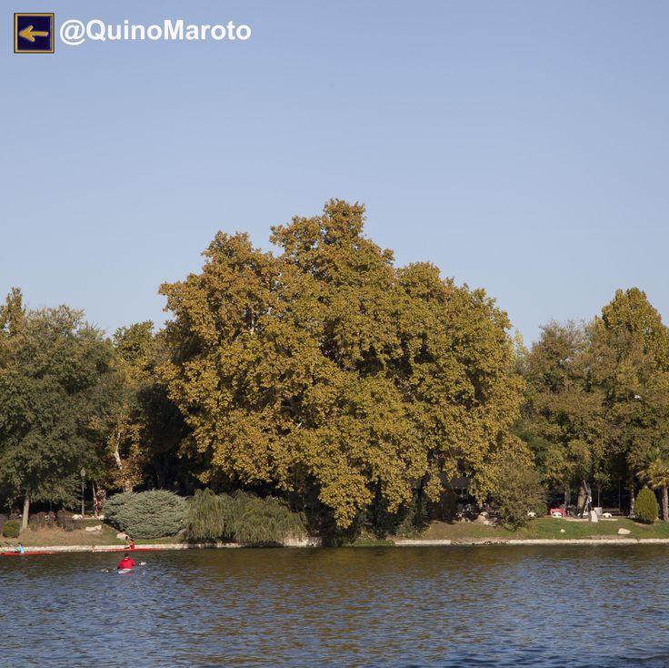 PLÁTANO GORDO Ruta de senderismo por los Árboles Singulares de la Casa de Campo de Madrid