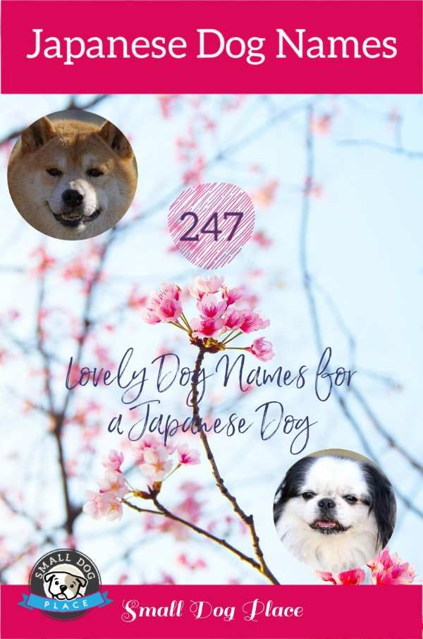247 Japanese Dog Names Along With Their Meanings In 2020 Dog Names Japanese Dogs New Puppy