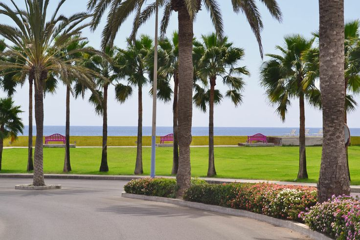 Landscaped areas in Pasito Blanco marina in Gran Canaria. Canary Island palms on the green grass and the blue ocean on the horizon.