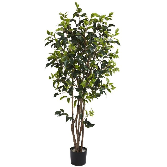 this 5u0027 ficus bushy silk tree will fit in your favorite planter and is presented - Ficus Trees