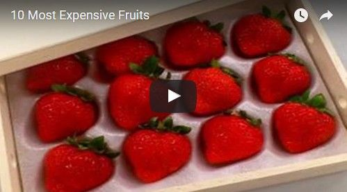 Beautifulplace4travel: 10 Most Expensive Fruits