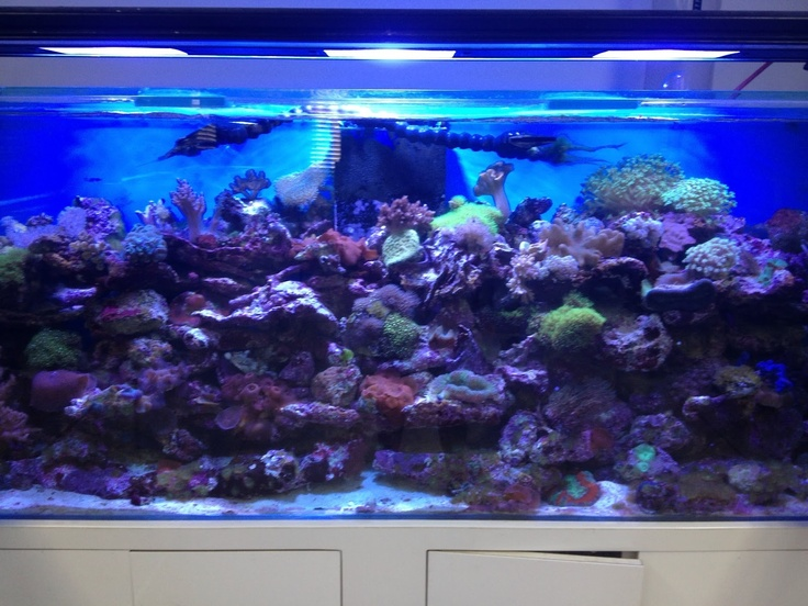 1000 ideas about aquarium store on pinterest warhammer for Fish store miami