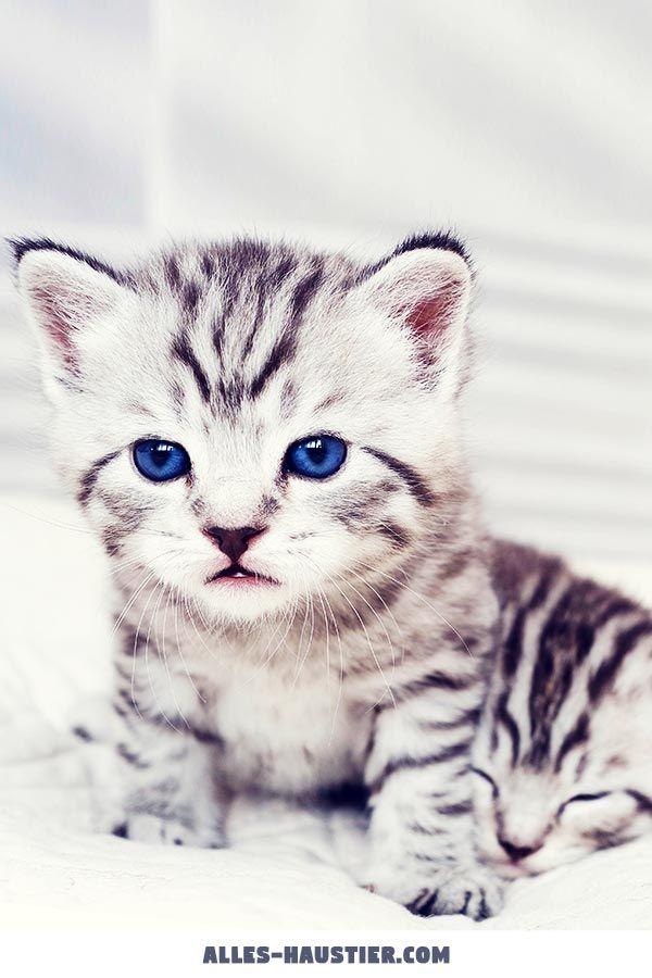 Ist Eine Katze Das Richtige Haustier Fur Mich Mit Bildern Katzen