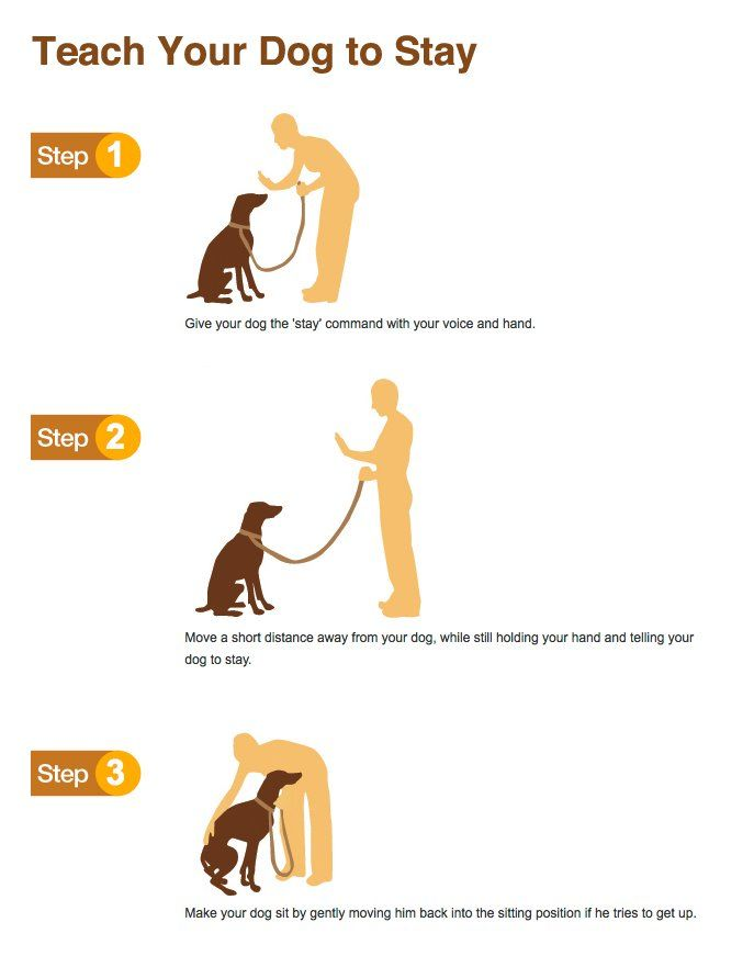 Teach your dog to stay