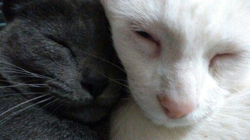 Luna and Bianco so close...