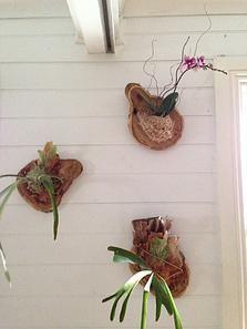 Bloodwood Botanica | Tropical Slices Living decor