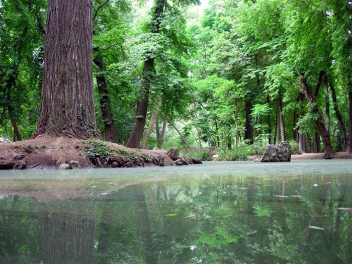 #México promueve aprovechamiento sustentable de recursos forestales