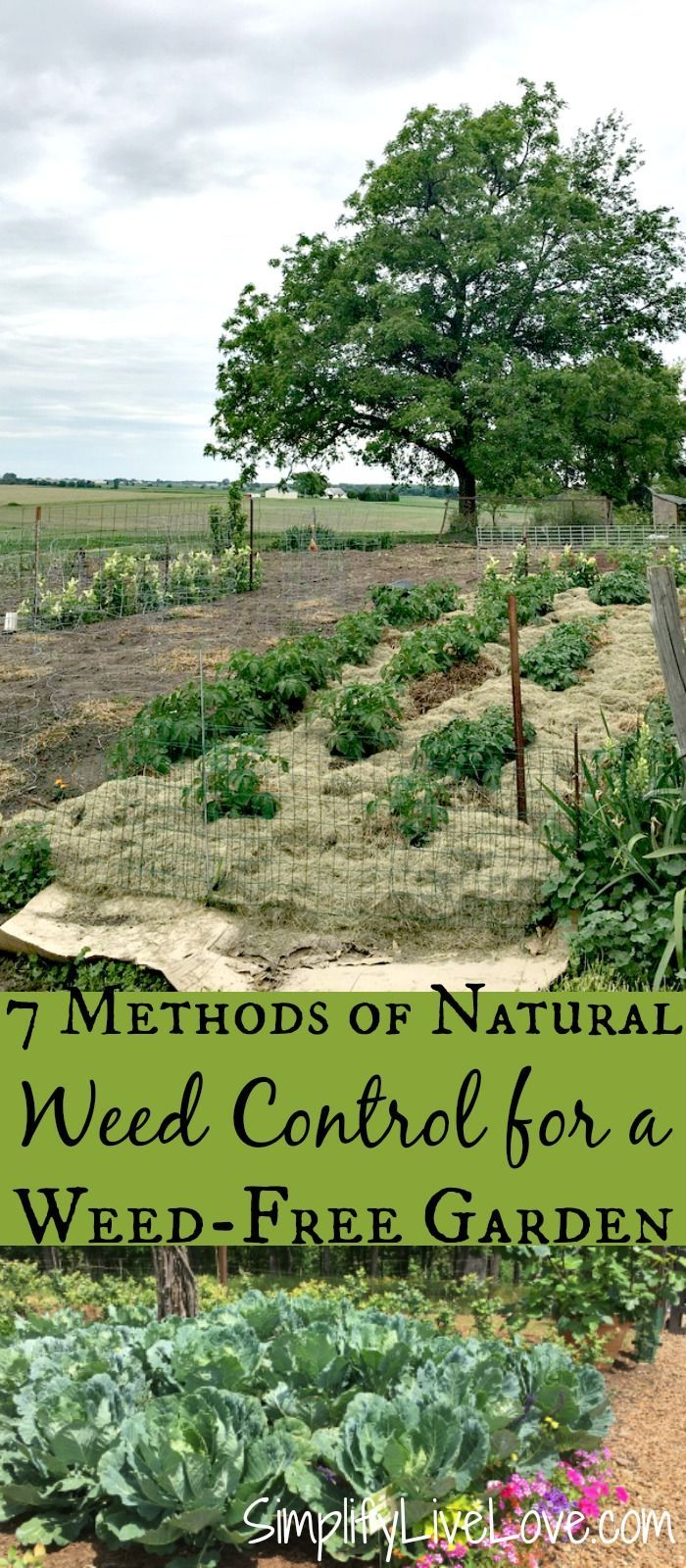 These 7 methods of natural weed control will free you from spending all your time weeding and help you establish a weed free garden! If you're as tired of weeding your garden as I am, then you need these tips for a weed free garden. #gardening #gardentips #gardens