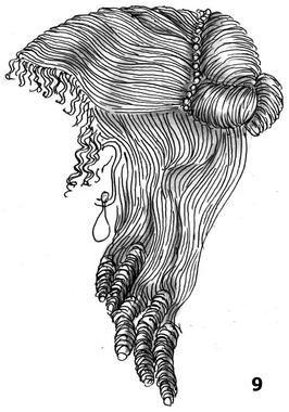 La chevelure divisée par une raie de milieu. La coiffure est plate, l'oreille est dégagée. Des friselis tout autour du visage La chevelure e...