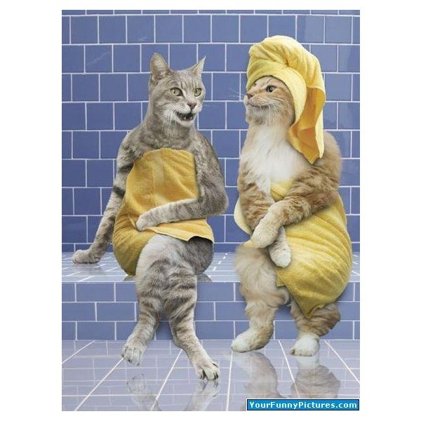 Image result for cat at spa meme