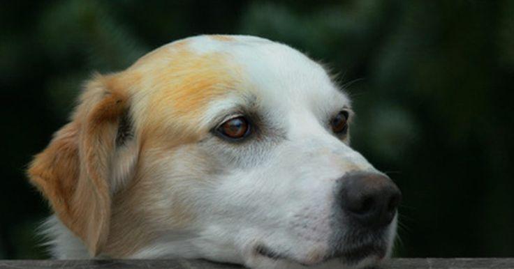 ¿Es natural que un perro se vaya solo a morir?. El momento en el que un compañero canino de confianza muere puede ser triste. Es muy común que los perros más viejos se alejen para morir en paz, a pesar de que muchos de sus propietarios desearían estar con ellos.